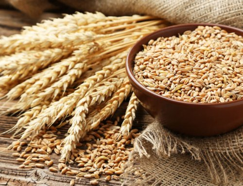 Is Wheat Ruining Your Health?